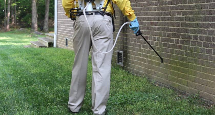 Areas Check Around Your Home Pest Control
