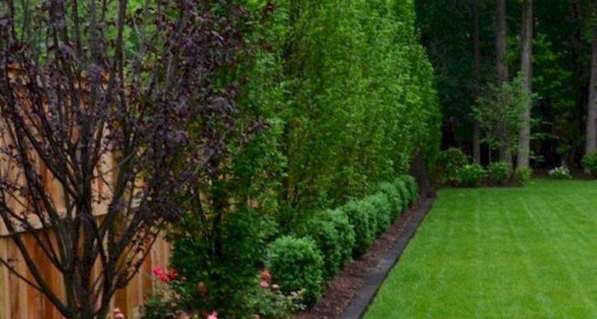 Best Backyard Landscaping Privacy Ideas Pinterest