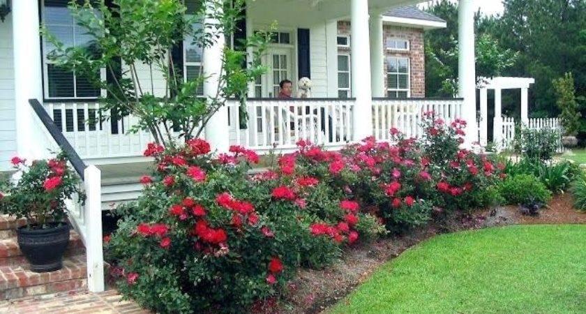 Best Plants Front Porch Abundantlifestyle Club