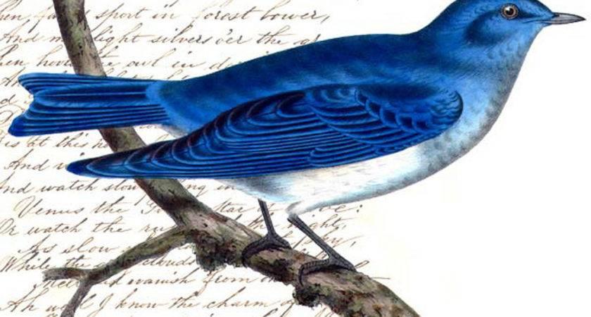 Birds Doodle Place