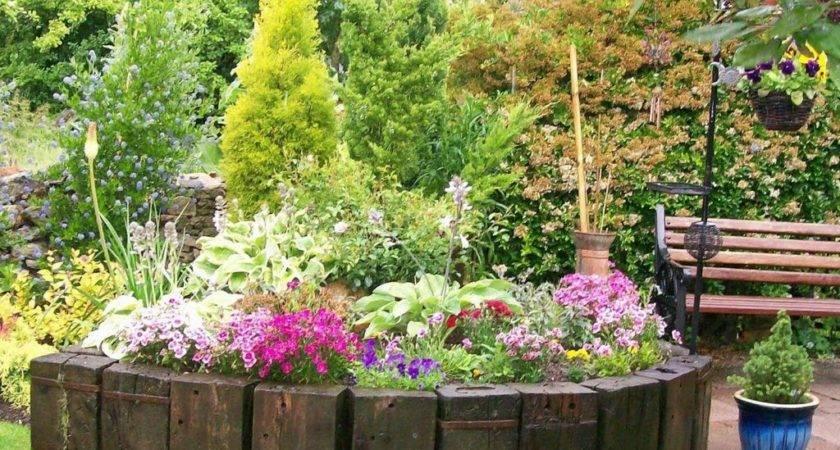 Colorful Low Maintenance Flower Garden Plant Winter
