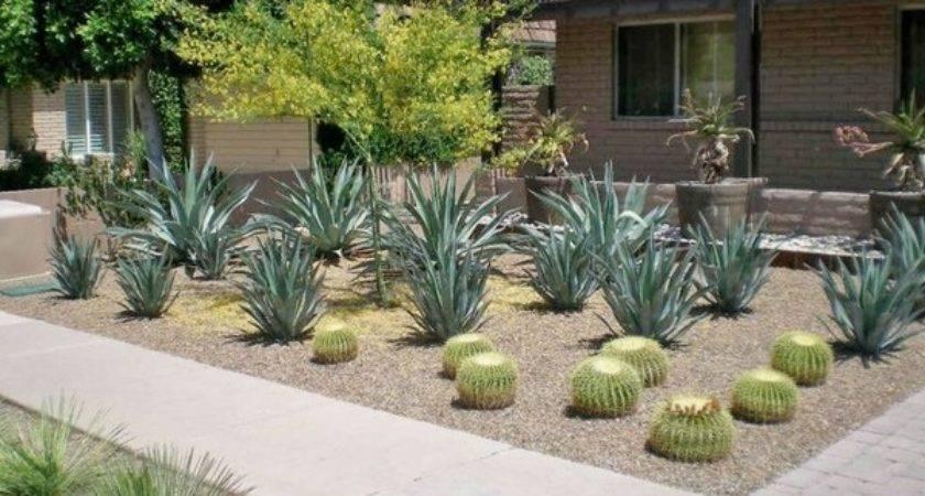Desert Landscaping Ideas Basic Rules Design Great