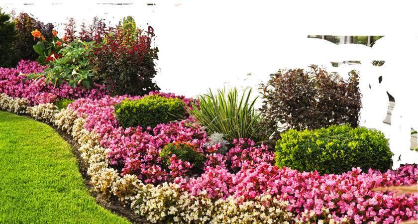 Flower Garden Flowers Kmygraphic