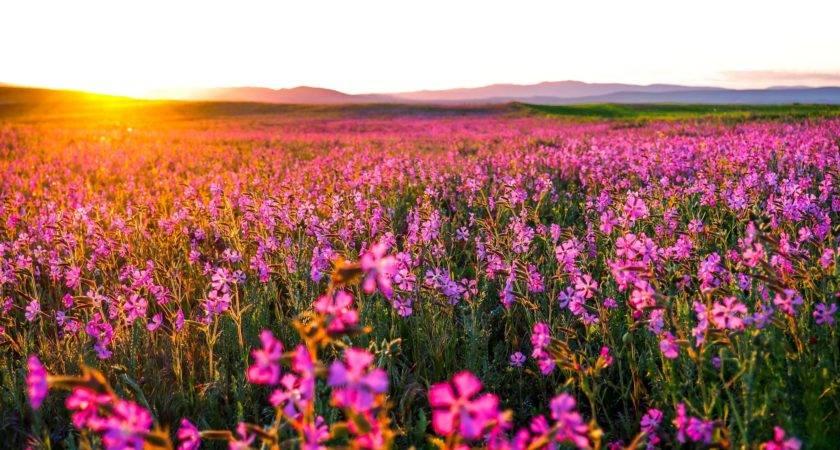 Flowers Landscape Nature