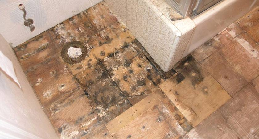 Fresh Plywood Flooring Installation Home Idea