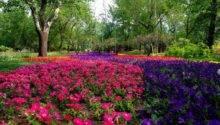 Garden Flower Landscaping Awesome Design