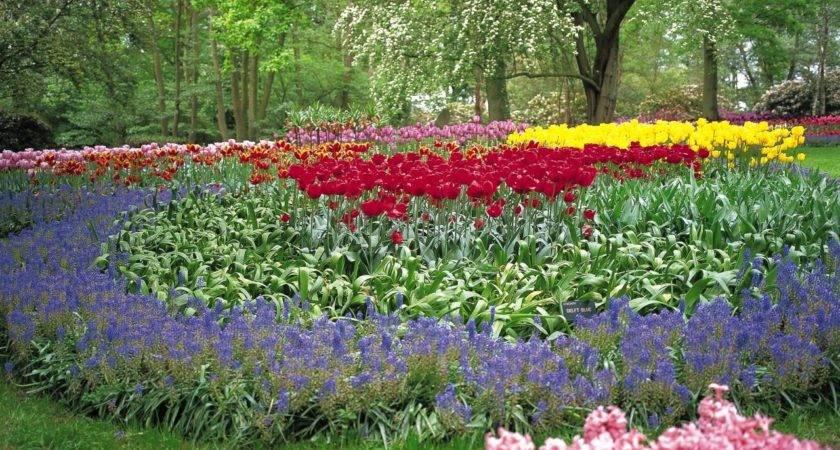 Growing Satisfying Summer Flowers Hgtv