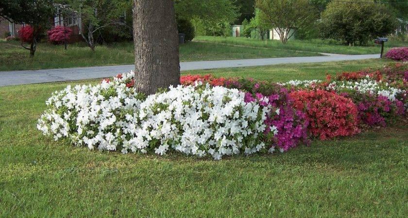 Home Garden Flowers Base Trees
