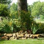 Ideas Landscaping Around Trees Newsonair