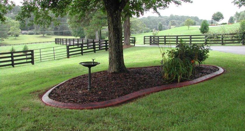 Landscaping Around Tree Landscape Pinterest Curb