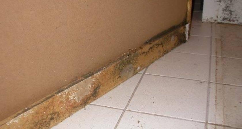 Leaking Shower Seal Repair Why Showers Leak