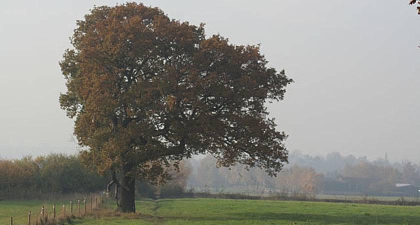 Lopsided Tree Geograph