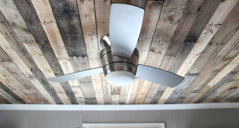 Maple Leaves Sycamore Trees Ceiling Deal