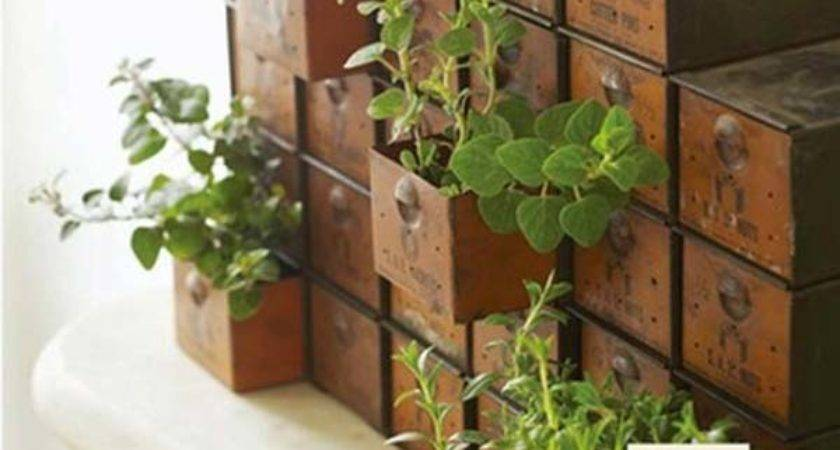 Mini Indoor Garden Ideas Green Your Home Amazing