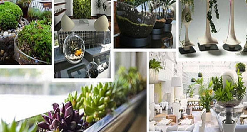 Modern Indoor Gardening Ideas Design Beautify Your