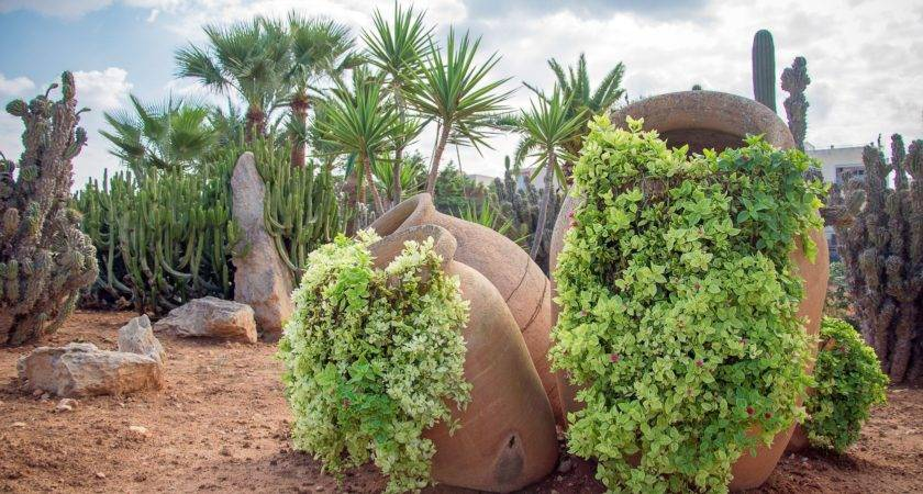 New Desert Style Landscaping Landscape Your