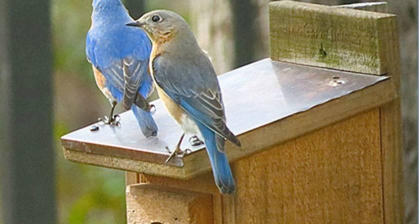 North Carolina Bluebird House Plans Home Design Style