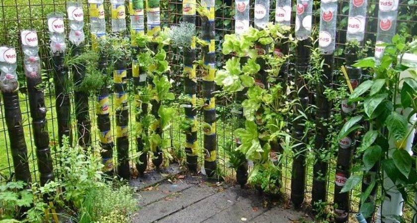 Plastic Bottle Vertical Garden Ideas Soda