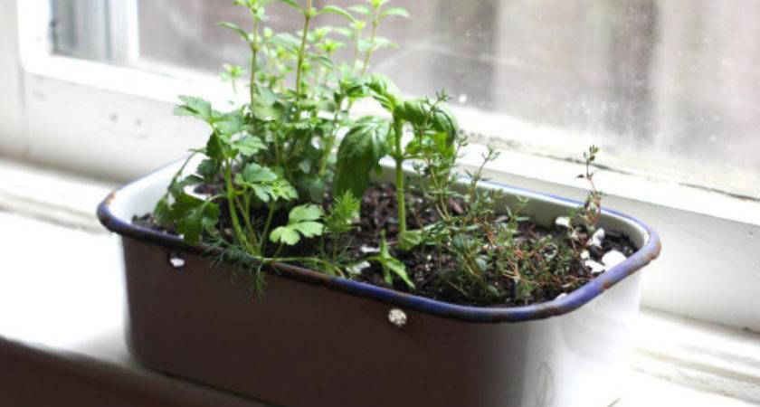 Portable Kitchen Window Herb Garden