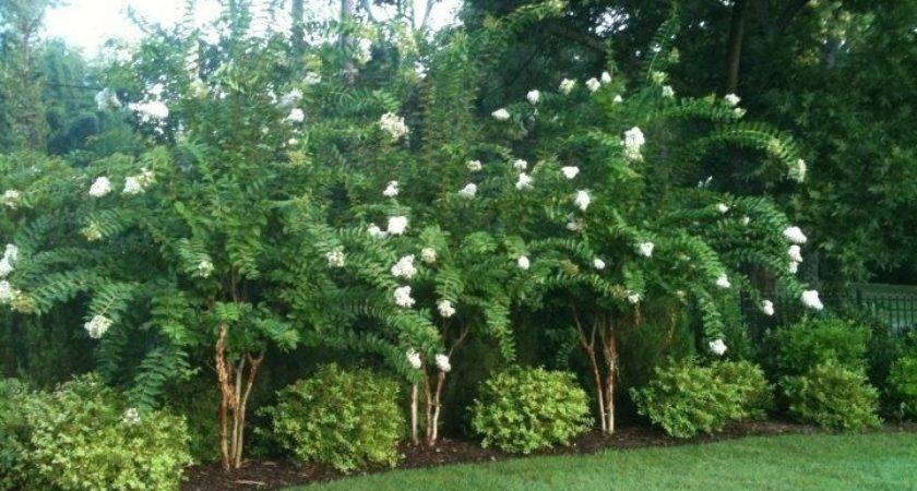 Privacy Landscaping Ketoneultras