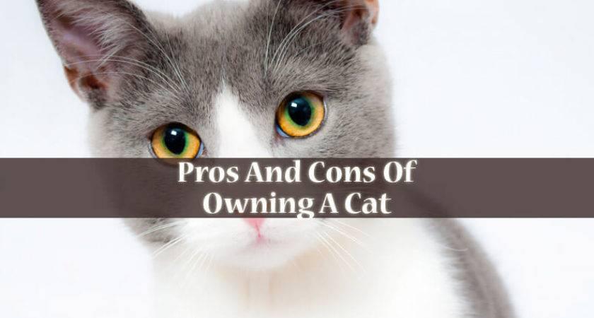 Pros Cons Owning Cat Londonlanguagelab