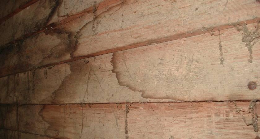 Repair Split Clapboard Siding Modernize