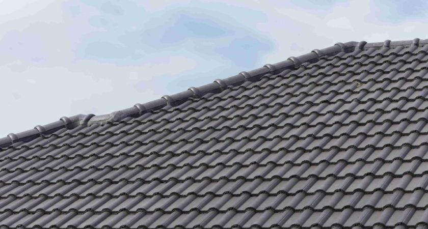 Roofing Tips Can Help Out Tortoise