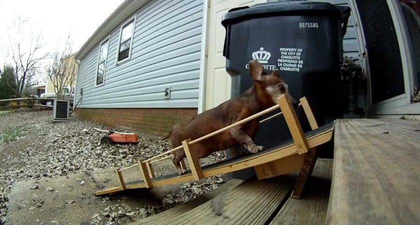 Tips Dog Ramp Stairs Build