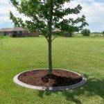 Tree Landscaping Ideas Newsonair