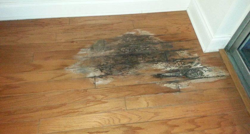 Vinyl Flooring Water Damage Happynewyearquotes