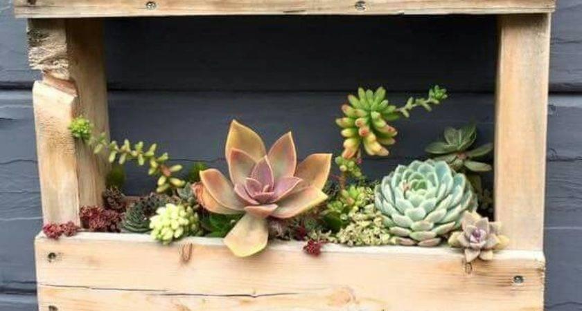 Wood Pallet Cycled Succulent Succulents Pinterest